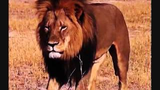 For Cecil the Lion