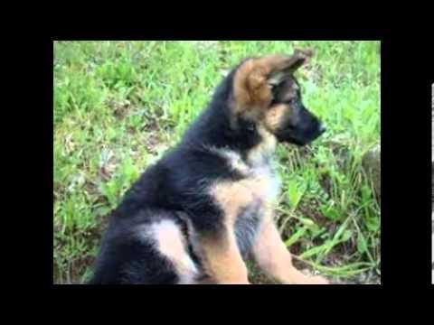 I cani pi belli del mondo youtube for I piu fighi del mondo