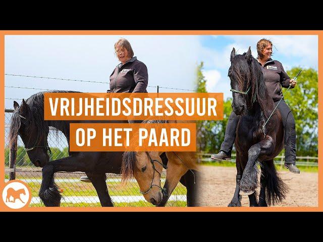 welke VRIJHEIDSDRESSUUR oefeningen kun je doen op het paard?