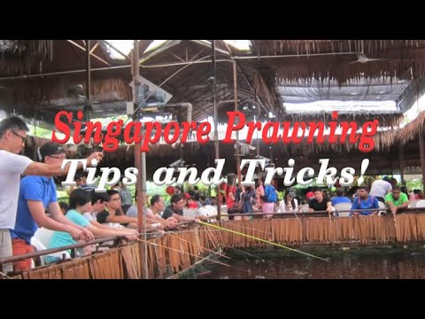Singapore Prawn Fishing - Tips & Tricks