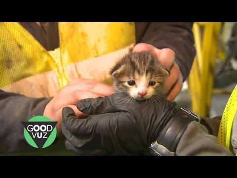 Kitten rescued from recycling center conveyor belt in the nick of time