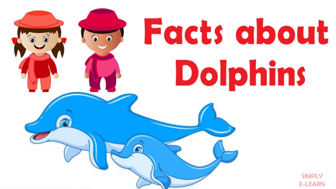 Interesting Dolphin Facts For Kids Information About Dolphins