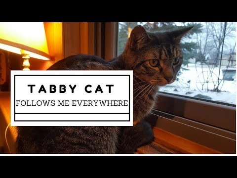 Rescued Tabby Cat Follows Me Everywhere