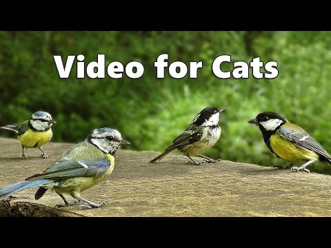 Videos for Cats – Birds Chirping and Bird Sounds