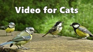 Videos for Cats - Birds Chirping and Bird Sounds