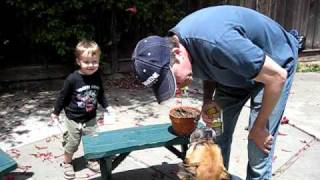 crazy dog drinks spit water hilarious boxer