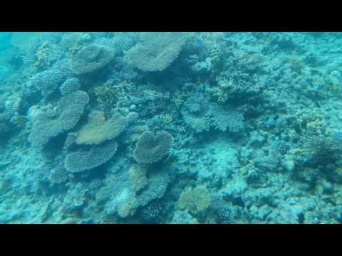 Hurghada Red Sea Coral Reef from Seascope 2017