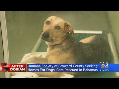 Humane Society Of Broward Seeking Forever Homes For Dogs, Cats Rescued In Bahamas