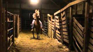 4-17-16-860- Chestnut Saddlebred gelding VIDEO 1