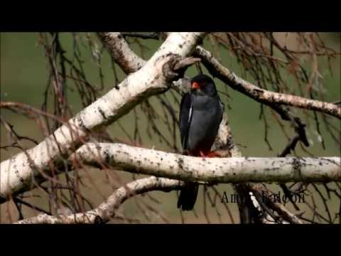 Spectacular Birding and Wildlife Holiday in Mongolia