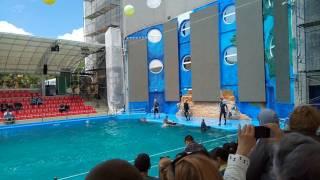 Дельфинарий Немо шоу Одесса дельфины 2017