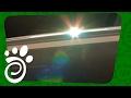 Правильное Освещение Аквариума (Часть Вторая). Все О Домашних Животных