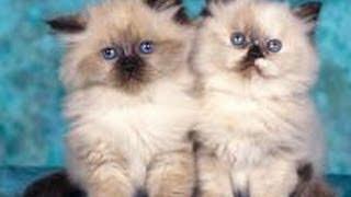 Коты и кошки, котята - какие они?