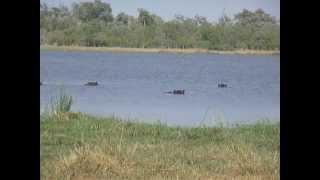 Voyage Botswana : Des Hippopotames dans le Delta de l'Okavango | Meltour