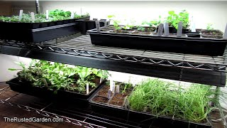 TRG Homestead VLOG E-10: Everything I am Seed Starting Now, Grow as I Grow Peppers & Greens & Tips