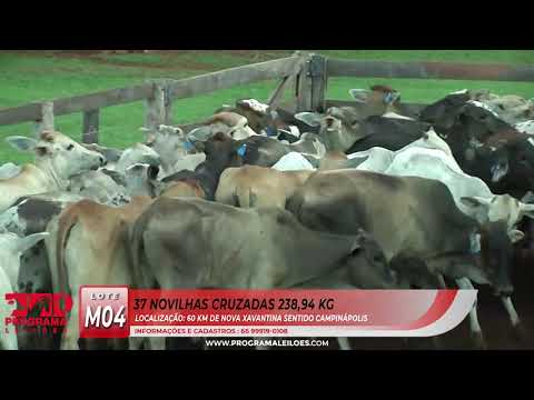 LOTE M04