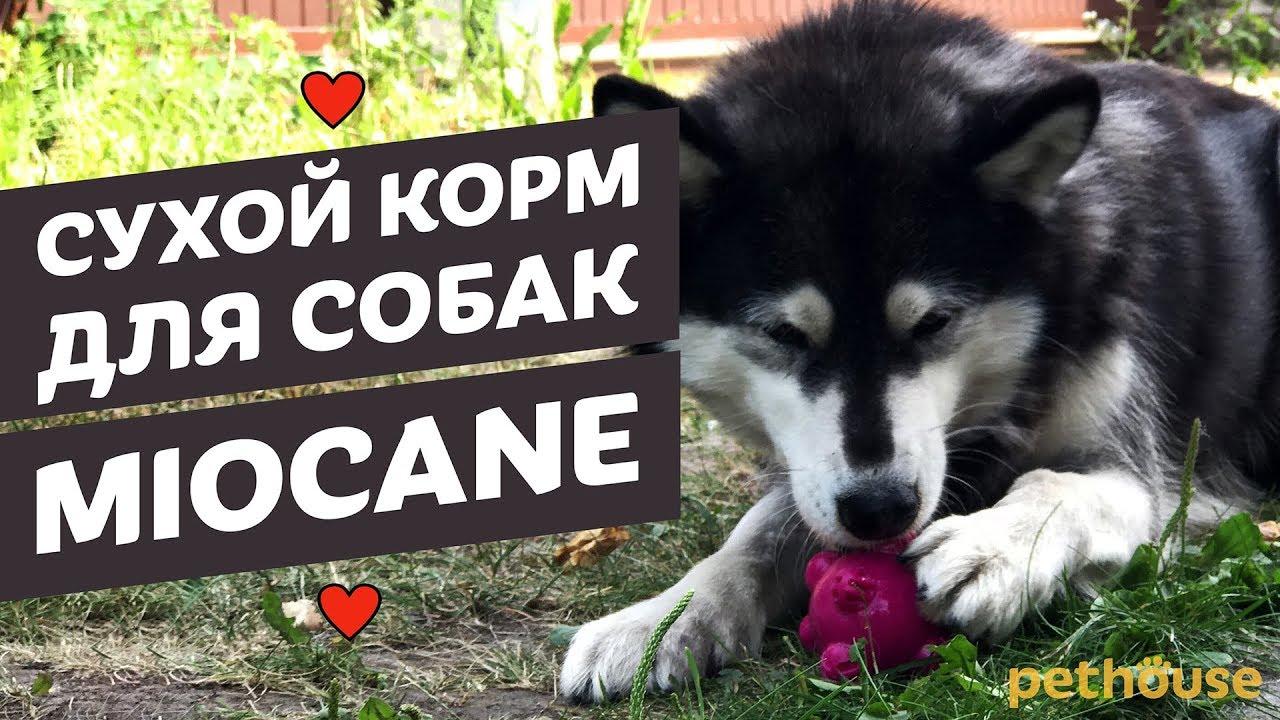 Корм для собак купить недорого в интернет-магазине товаров для собак unizoo с доставкой по москве, подмосковью и регионам россии.