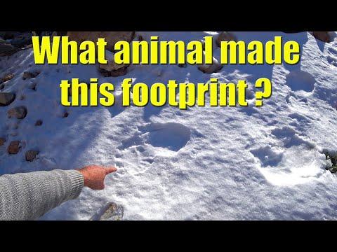 What Made This HUGE Footprint - Sailing A B Sea (Ep.052)