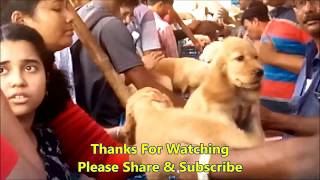 Must See: The Most Attractive View Of Galiff  Street Puppy Market