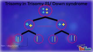 MONOSOMY AND TRISOMY