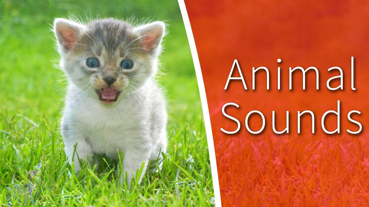 Animal Sounds for Kids - 34 amazing animals