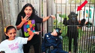 القرد يهرب من القفص ويهرب من الشرطي سجن نتظاهر اللعب  Heidi و Zidan