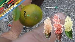 Innesti agrumi - Innesto di finger lime rosa (limone caviale) su calamondino (agr. Marco Beconcini)