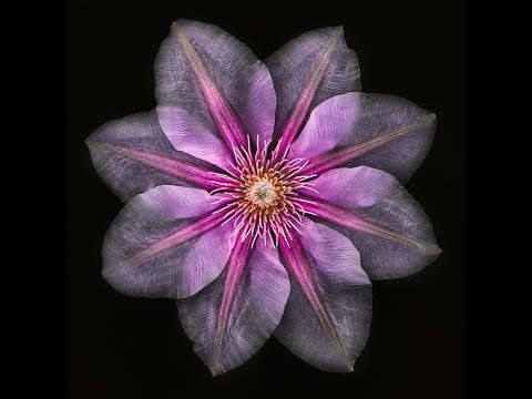 Creative Floral Photography with Harold Davis