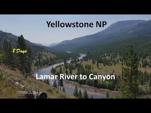 8 Days In Yellowstone - Lamar River To Canyon