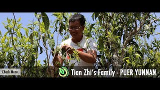 Tea Hunting | Ancient Artisanal Yunnan Black Tea Trailer