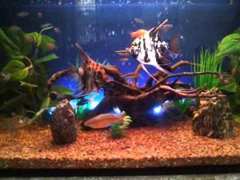 My Beautiful 32 Gallon Community Fish Tank Artificial plants - YouTube