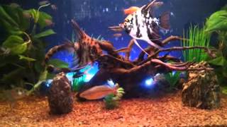 My Beautiful 32 Gallon Community Fish Tank Artificial Plants