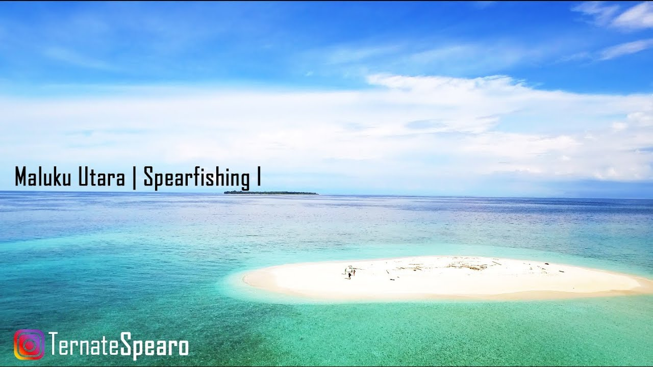 maluku utara spearfishing session one youtube