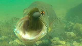 Crazy Underwater Footage Of Bass Attacking Jigs!! **Slow Motion Strikes**