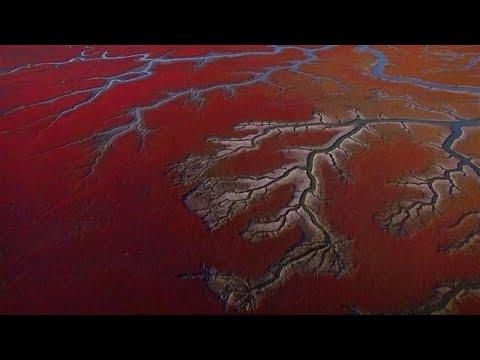 China's extraordinary Red Beach