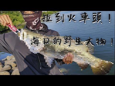 【海口釣魚】 野生粗貨!!大魚刷新紀錄!! feat.前打小紘