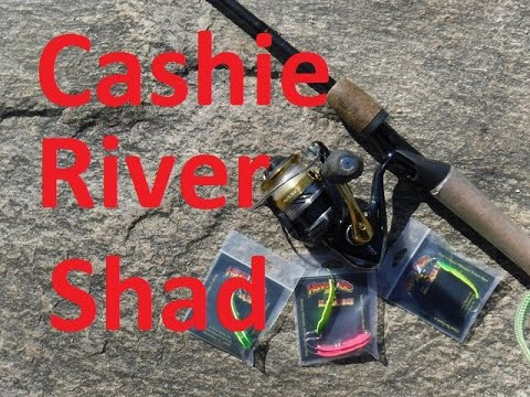 Cashie River Shad Fishing - How To Catch Shad In The Cashie River