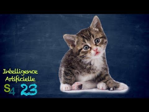 Qu'est ce qu'un chat, bordel ?!? IA 23