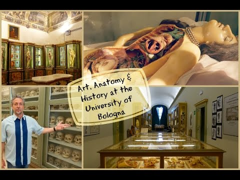 Art, Anatomy and History at the University of Bologna