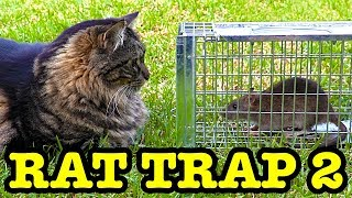 Rats That Eat Cat Food Caught On Arlo Camera Rat 2 Catch & Release