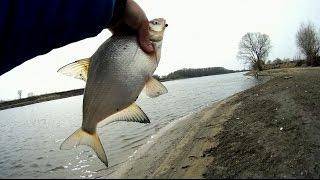 Рыбалка на фидер, на нижней Москве-реке, весна.