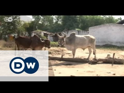 Young Global Leaders - Internet for rural India | Global 3000