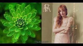 Florence + The Machine vs. Macroform -