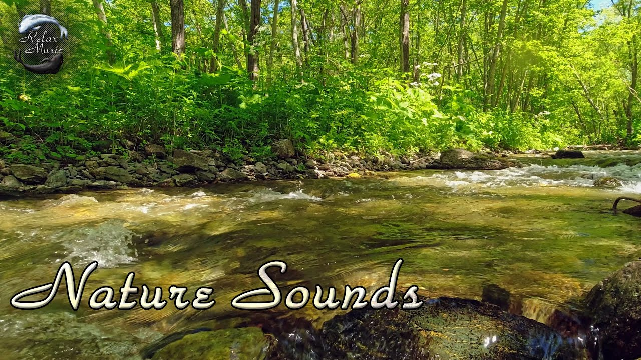 Nature Sounds, Forest Sounds, Birds Singing, Water Sounds   Relaxation   Mindfulness   Meditation