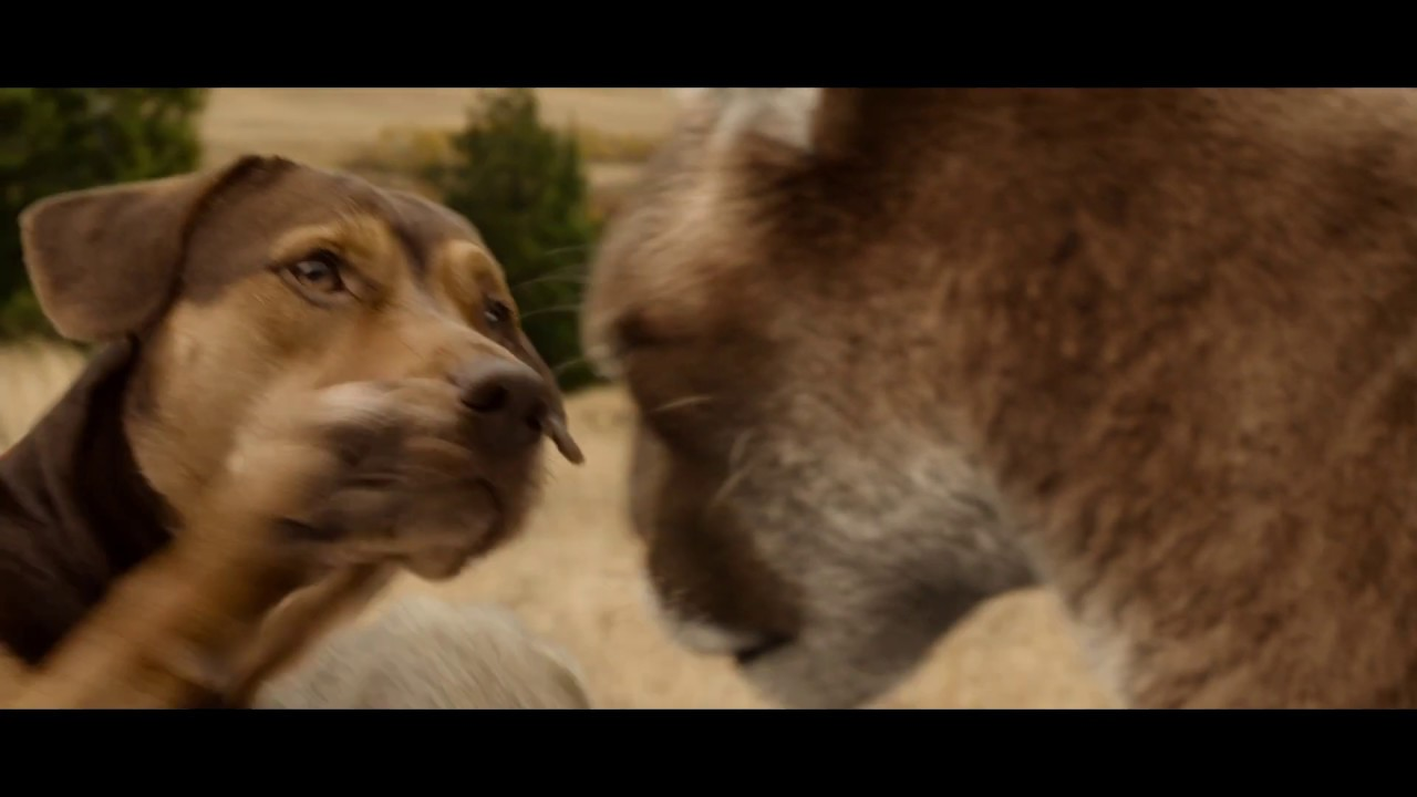Pixomondo Creates the 'Purrfect' Big Kitten in 'A Dog's Way