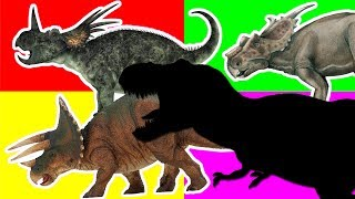 Wrong Shadow Dinosaurs! Learn Names of Dinosaurs For Kids. Styracosaurus, Triceratops, T Rex Toys~