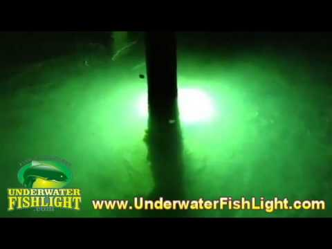 underwater fish lights in shallow water - lighting up the sea, Reel Combo