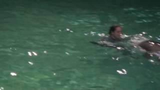Дельфинариум: ШОУ дельфинов#58