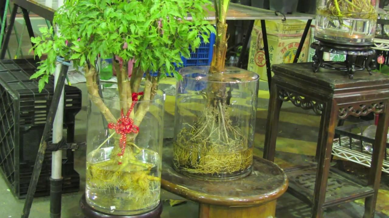 水耕植物 | Doovi
