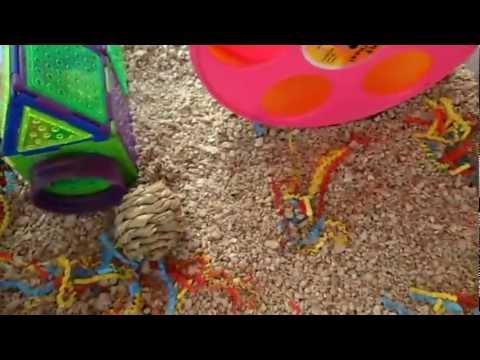 Robo hamsters peanut and snow bin cage tour doovi for Hamster bin cage tutorial